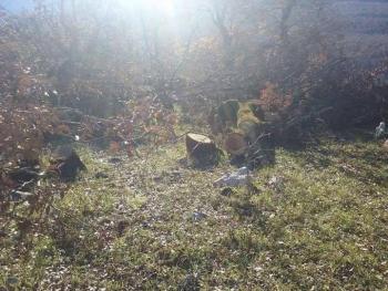 Καταγγελία: Κόβονται δέντρα και δάση στο Πωγώνι
