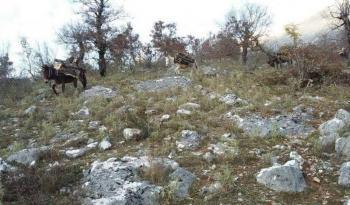Κόβονται δέντρα και δάση στο Πωγώνι Βορείου Ηπείρου